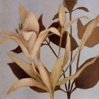 """Foliage on Teal II detail by Lanie Loreth - 24"""" x 24"""""""