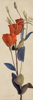 """Red Graldiflorum I by Lanie Loreth - 12"""" x 36"""""""