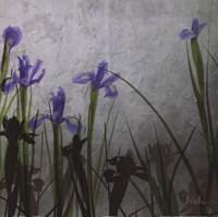 "Blue Irises II by Patricia Pinto - 18"" x 18"""