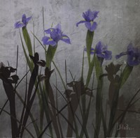 "Blue Irises I by Patricia Pinto - 18"" x 18"""