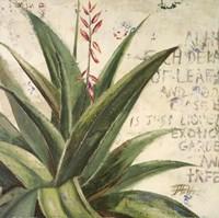 Aloe II Fine Art Print