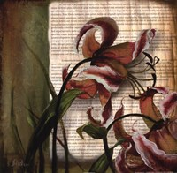 "Vintage Studio II by Patricia Pinto - 18"" x 18"""