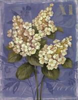 "Tardiva Hydrangea- mini by Pamela Gladding - 11"" x 14"", FulcrumGallery.com brand"