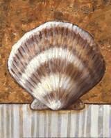 Vintage Shell III - mini Fine Art Print