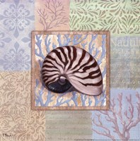 "Oceanic Shell Collage III by Paul Brent - 12"" x 12"""