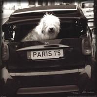 Paris Dog I Framed Print