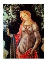 Primavera, detail of Venus, c.1478 Fine Art Print