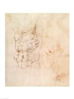 Torso Study by Michelangelo Buonarroti - various sizes