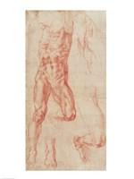 W.13r Study of a male nude, stretching upwards Fine Art Print