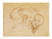 Study of a dog by Michelangelo Buonarroti - various sizes, FulcrumGallery.com brand