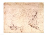 Studies of hands and an arm by Michelangelo Buonarroti - various sizes, FulcrumGallery.com brand
