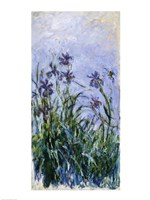 Purple Irises, 1914-17 Framed Print