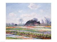 Tulip Fields at Sassenheim, near Leiden, 1886 Fine Art Print