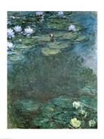 Water-Lilies Fine Art Print