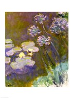 Waterlilies and Agapanthus-17, 1914 by Claude Monet, 1914 - various sizes