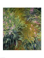 Iris (green) Fine Art Print