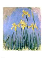 The Yellow Irises, c.1918-25 Fine Art Print