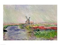Tulip Field in Holland Fine Art Print