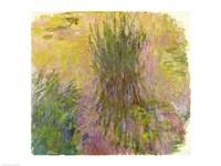 Waterlilies (yellow) Fine Art Print