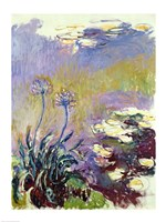 The Agapanthus, 1914-17 Fine Art Print