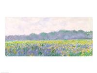 Field of Yellow Irises at Giverny, 1887 Fine Art Print