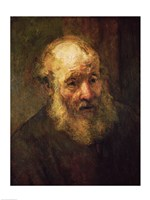 Head of an Old Man, c.1650 Fine Art Print
