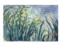 Yellow and Purple Irises, 1924-25 Fine Art Print
