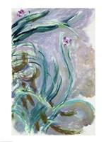 Iris (gray) Fine Art Print