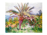 Palm Tree at Bordighera by Claude Monet - various sizes, FulcrumGallery.com brand