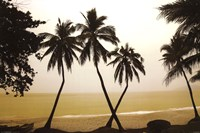 "36"" x 24"" Palm Tree Pictures"