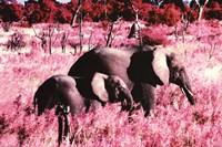 "Elephants - Standing - 36"" x 24"""