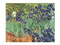Irises, 1889 Fine Art Print