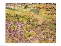 Meadow with Butterflies, 1890 Fine Art Print