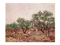 The Olive Pickers - picking Fine Art Print