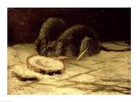 Two Rats Fine Art Print