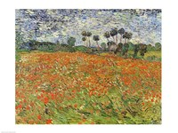 Field of Poppies Fine Art Print