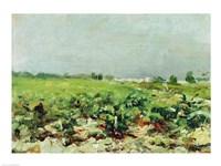 Celeyran, View of the Vineyard, 1880 by Henri de Toulouse-Lautrec, 1880 - various sizes