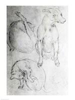 Study of a dog and a cat Fine Art Print