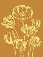 """Tulip 20 - 12"""" x 16"""""""