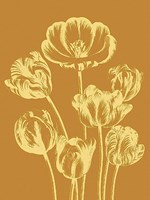 """Tulip 20 - 18"""" x 24"""""""