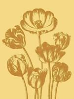 """Tulip 19 - 18"""" x 24"""""""