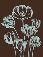 """Tulip 17 - 30"""" x 40"""""""