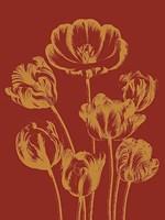"""Tulip 16 - 18"""" x 24"""""""