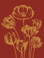 """Tulip 16 - 30"""" x 40"""""""