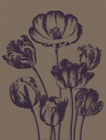 """Tulip 14 - 18"""" x 24"""" - $25.99"""