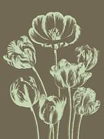 """Tulip 12 - 12"""" x 16"""" - $12.99"""