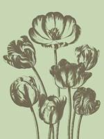 """Tulip 11 - 12"""" x 16"""""""