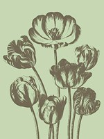 """Tulip 11 - 30"""" x 40"""""""