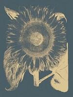 "Sunflower 2 - 12"" x 16"""