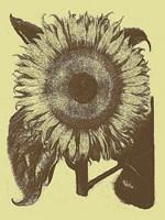 "Sunflower 4 - 12"" x 16"""